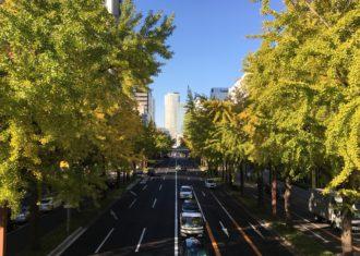 桜通の銀杏が黄葉しはじめた