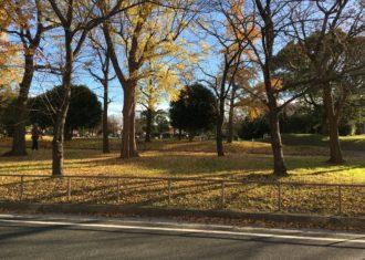 公園の落葉にもの思う