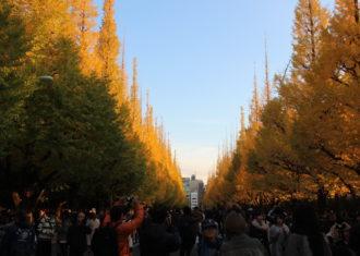 東京 絵画館まえの銀杏並木