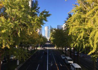 桜通のイチョウ1 黄葉し始めました