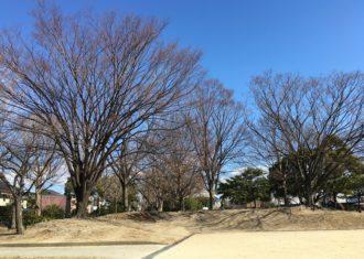 冬化粧した木々も神々しく美しい