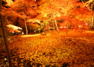 紅葉の絶景 京都永観堂