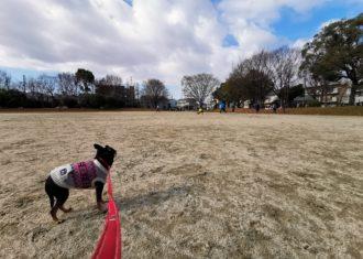 正月に愛犬と散歩