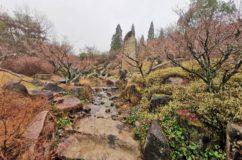 万博記念公園・日本庭園を見る