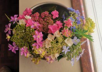 南知多の草原で花を摘む